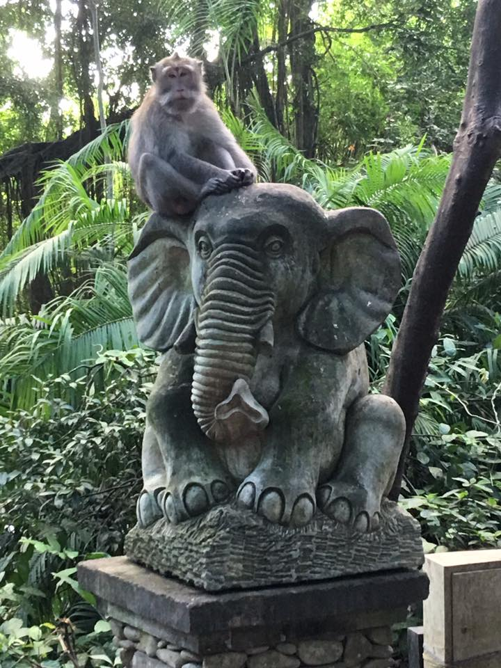MonkeyForest